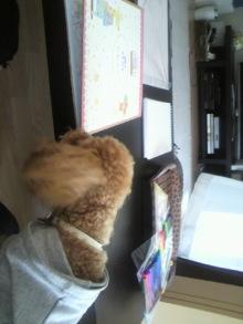 愛犬トイプーの鈴ちゃん☆ライフスタイル-2011051913240000.jpg