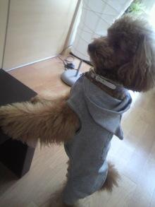 愛犬トイプーの鈴ちゃん☆ライフスタイル-2011051913250000.jpg