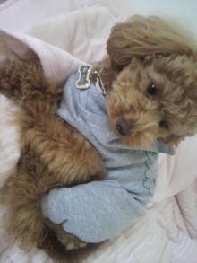 愛犬トイプーの鈴ちゃん☆ライフスタイル-2011051913230003.jpg
