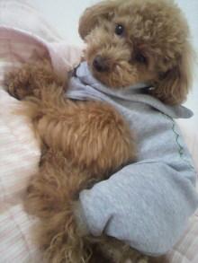 愛犬トイプーの鈴ちゃん☆ライフスタイル-2011051913230004.jpg