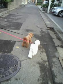 愛犬トイプーの鈴ちゃん☆ライフスタイル-2011052117360002.jpg
