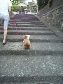 愛犬トイプーの鈴ちゃん☆ライフスタイル-2011052117470000.jpg
