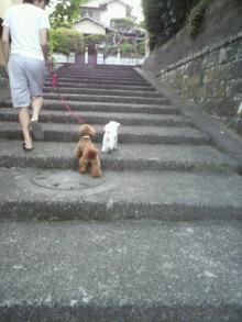 愛犬トイプーの鈴ちゃん☆ライフスタイル-2011052117470001.jpg