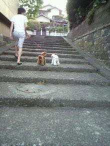 愛犬トイプーの鈴ちゃん☆ライフスタイル-2011052117470002.jpg