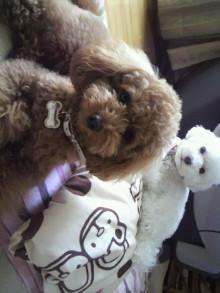 愛犬トイプーの鈴ちゃん☆ライフスタイル-2011052206250000.jpg