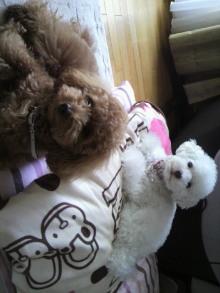 愛犬トイプーの鈴ちゃん☆ライフスタイル-2011052206250001.jpg