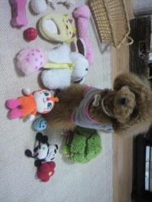 愛犬鈴ちゃん~トイプードル☆ライフスタイル~-2011052715370000.jpg