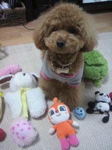 愛犬鈴ちゃん~トイプードル☆ライフスタイル~-2011052715370001.jpg