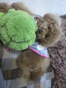 愛犬鈴ちゃん~トイプードル☆ライフスタイル~-2011052715390000.jpg