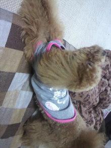 愛犬鈴ちゃん~トイプードル☆ライフスタイル~-2011052715400002.jpg