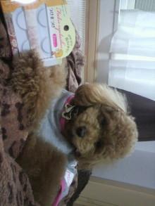 愛犬鈴ちゃん~トイプードル☆ライフスタイル~-2011052715440003.jpg
