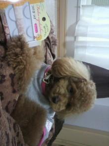 愛犬鈴ちゃん~トイプードル☆ライフスタイル~-2011052715440002.jpg