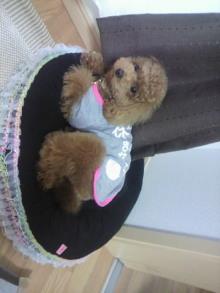 愛犬鈴ちゃん~トイプードル☆ライフスタイル~-2011052715460000.jpg