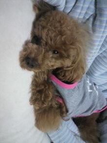 愛犬鈴ちゃん~トイプードル☆ライフスタイル~-2011052801570000.jpg