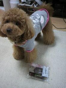 愛犬鈴ちゃん~トイプードル☆ライフスタイル~-2011052813060000.jpg