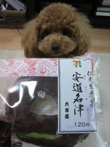 愛犬鈴ちゃん~トイプードル☆ライフスタイル~-2011052813060001.jpg