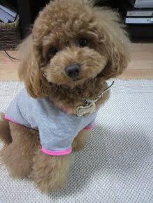 愛犬鈴ちゃん~トイプードル☆ライフスタイル~-2011052813060003.jpg