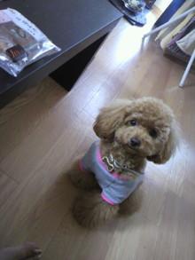 愛犬鈴ちゃん~トイプードル☆ライフスタイル~-2011052813070002.jpg