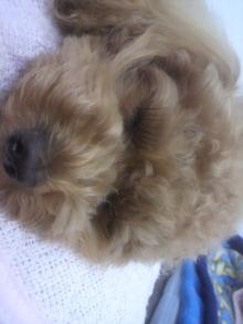 愛犬鈴ちゃん~トイプードル☆ライフスタイル~-2011052816320000.jpg