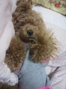 愛犬鈴ちゃん~トイプードル☆ライフスタイル~-2011053002080000.jpg