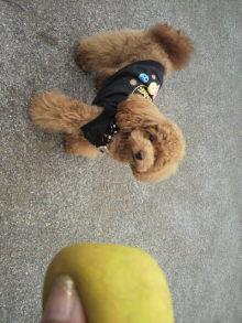 愛犬鈴ちゃん~トイプードル☆ライフスタイル~-2011053015230001.jpg