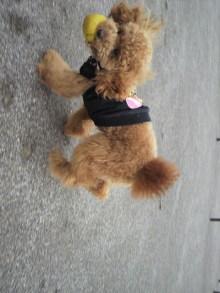 愛犬鈴ちゃん~トイプードル☆ライフスタイル~-2011053015250001.jpg