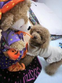 愛犬鈴ちゃん~トイプードル☆ライフスタイル~-2011053115290000.jpg