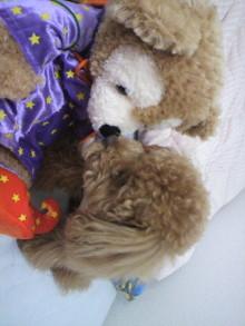 愛犬鈴ちゃん~トイプードル☆ライフスタイル~-2011053115300001.jpg
