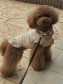 愛犬鈴ちゃん~トイプードル☆ライフスタイル~-2011060116370000.jpg