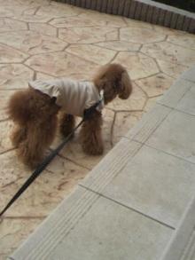 愛犬鈴ちゃん~トイプードル☆ライフスタイル~-2011060116370002.jpg