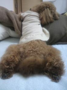 愛犬鈴ちゃん~トイプードル☆ライフスタイル~-2011060213300001.jpg