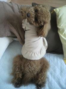 愛犬鈴ちゃん~トイプードル☆ライフスタイル~-2011060213280002.jpg