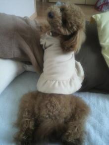 愛犬鈴ちゃん~トイプードル☆ライフスタイル~-2011060213280000.jpg