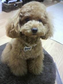 愛犬鈴ちゃん~トイプードル☆ライフスタイル~-2011060219240000.jpg