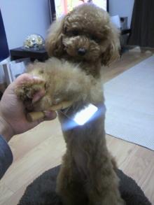 愛犬鈴ちゃん~トイプードル☆ライフスタイル~-2011060219280000.jpg