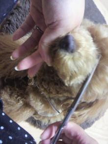 愛犬鈴ちゃん~トイプードル☆ライフスタイル~-2011060219210000.jpg