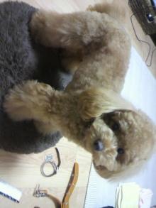 愛犬鈴ちゃん~トイプードル☆ライフスタイル~-2011060219300000.jpg