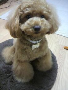 愛犬鈴ちゃん~トイプードル☆ライフスタイル~-2011060219320001.jpg