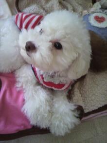 愛犬鈴ちゃん~トイプードル☆ライフスタイル~-2011060316570000.jpg