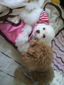 愛犬鈴ちゃん~トイプードル☆ライフスタイル~-2011060316580000.jpg