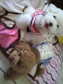 愛犬鈴ちゃん~トイプードル☆ライフスタイル~-2011060316590002.jpg