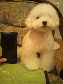 愛犬鈴ちゃん~トイプードル☆ライフスタイル~-2011060319170000.jpg