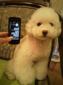 愛犬鈴ちゃん~トイプードル☆ライフスタイル~-2011060319170001.jpg