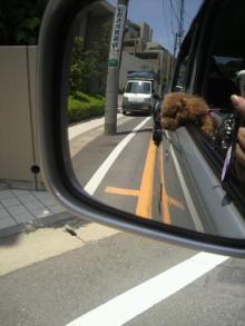 愛犬鈴ちゃん~トイプードル☆ライフスタイル~-2011060411540000.jpg