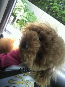 愛犬鈴ちゃん~トイプードル☆ライフスタイル~-2011060411540002.jpg