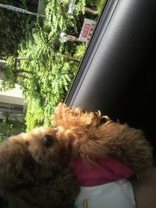 愛犬鈴ちゃん~トイプードル☆ライフスタイル~-2011060411540003.jpg