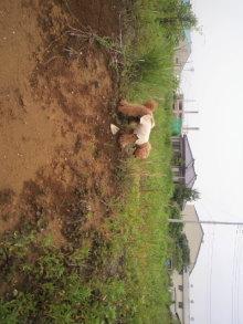 愛犬鈴ちゃん~トイプードル☆ライフスタイル~-2011060513030001.jpg