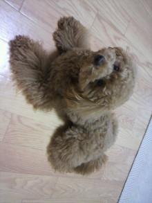 愛犬鈴ちゃん~トイプードル☆ライフスタイル~-2011060516460003.jpg