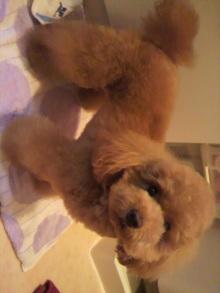 愛犬鈴ちゃん~トイプードル☆ライフスタイル~-2011060517330001.jpg
