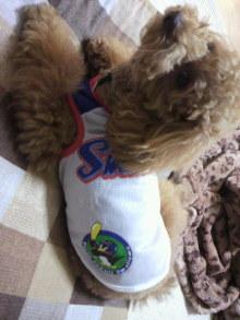 愛犬鈴ちゃん~トイプードル☆ライフスタイル~-2011052520490002.jpg